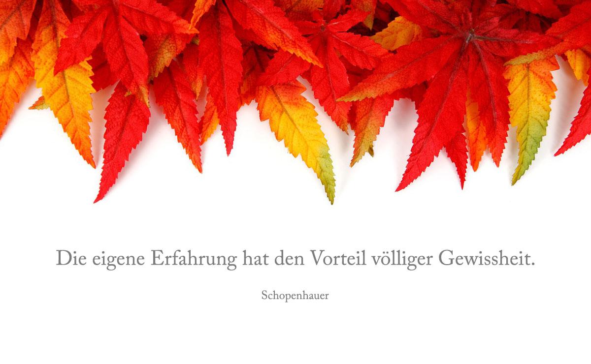 10-19-Schopenhauer-Eigene-Erfahrung